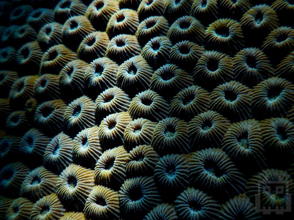 Coral a bit closer